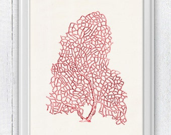 Sea fan coral no.07-Seafan in red - sea life print- Marine  sea life illustration A4 print SPC046