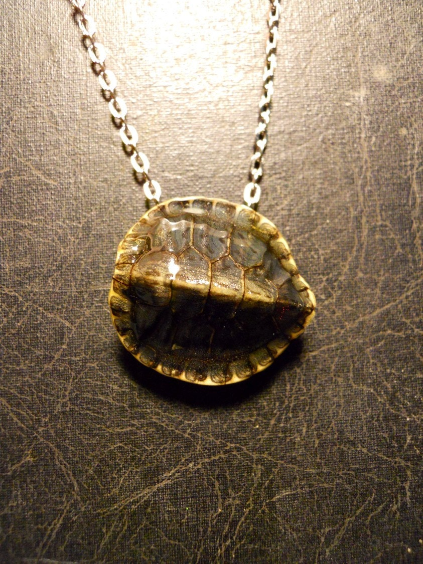 Baby turtle skeleton shell preserved specimen taxidermy for Real tortoise shell jewelry