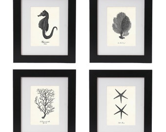 Coastal Print Set of 4 in Black, Posters, Nautical Wall Art, Coastal Life, Seahorse Print, Coral Prints, Starfish Print, Beach Home Decor