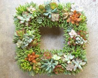 Succulent Wreath Square, Diamond 11 inch diameter