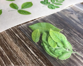 Over 50 Individual Leaves Edible Leaf Flowers Leaves YOU CUT OUT on Edible Wafer Paper 25 Per Sheet