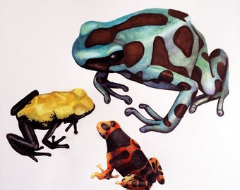 Frogs - Poison Dart Frogs