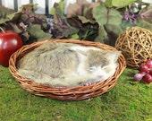 Grey Gray Cat Sleeping w/ Basket Kitty Adorable Pet Furry Animal Taxidermy Figurine Decor Med