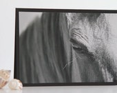 Horse Photography Card, Black and White Photo Card, Animal Picture, Blank Nature Notecard, Birthday Wishes, Hello