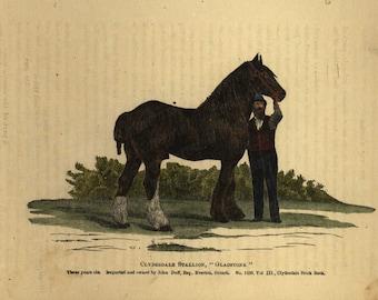 Antique Original Lithograph of Horse - Gladstone