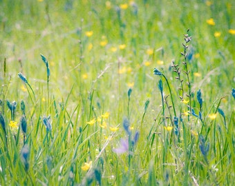 Wildflowers in Spring -yellow and puple