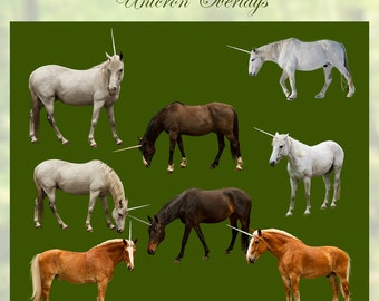 8 Unicorn PNG Digital Photography Overlays Real Horses