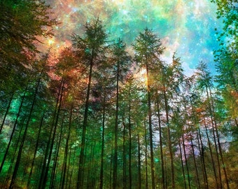 Nature Photography, Forest, Trees, Starry Sky, Giclee Print, Home Decor