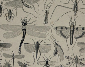 1866.Antique print.Engraving.ENTOMOLOGY,insects.147 years old print.Animated Nature.Antique arachnides print.9,8x6,2 inches or 16x25 cm.