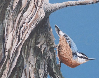 Red-breasted Nuthatch Painting