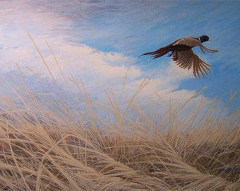 Ring-Necked Pheasant painting