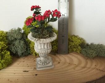 Potted geranium plant