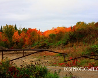 Autumn, trees, wall art, fence, orange, red, nature, nature photography,