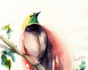 Bird of Paradise Painting, Original Watercolor Painting, Bird Watercolour Art