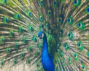 Feathered Beauty Fine Art - Wall Art by Jessica Yahn