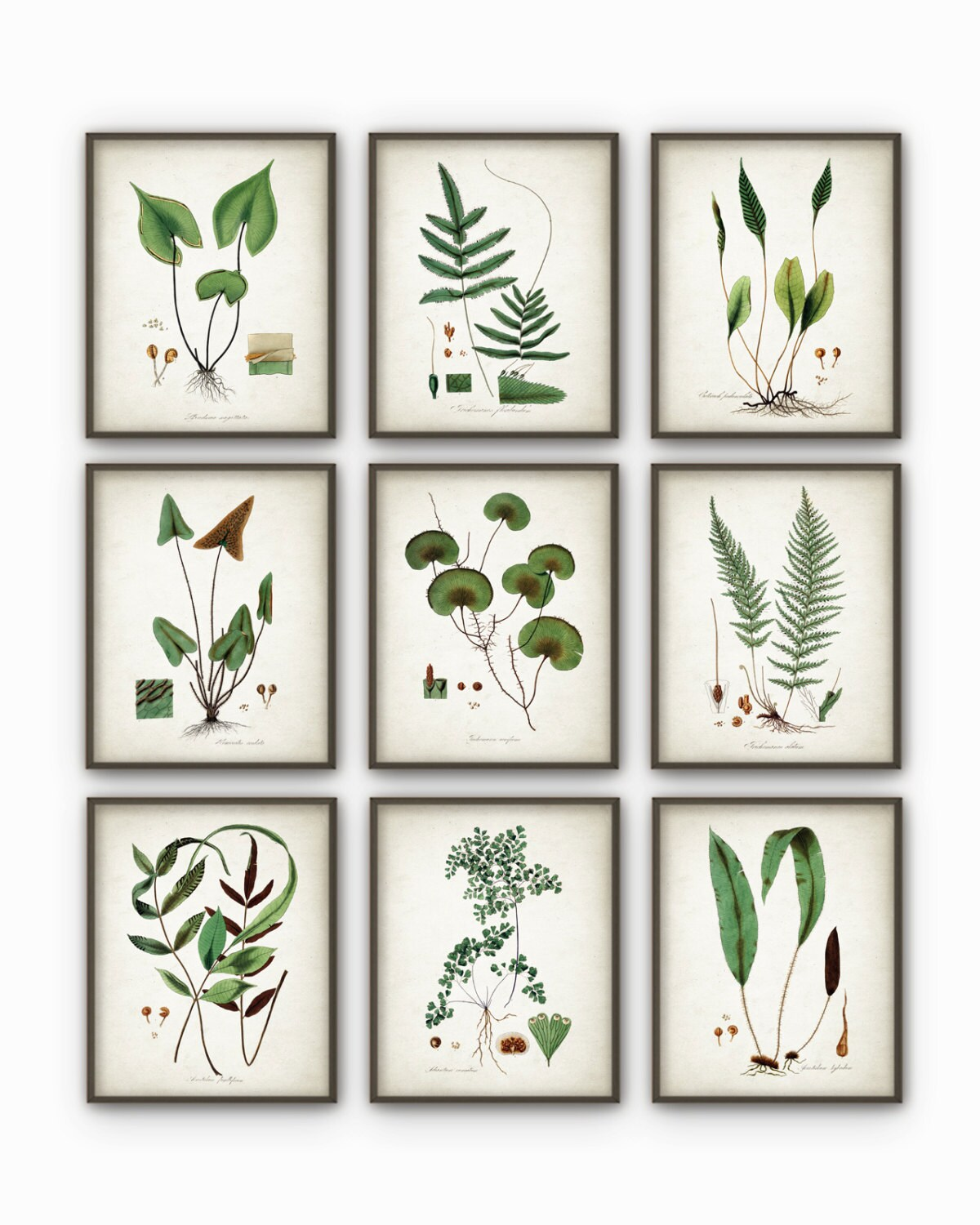 Green Plant Wall Decor Set Of 9 Botanical Art Posters