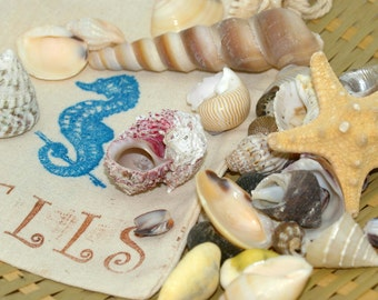 My First Shell Collection - Sea Shells, Starfish, For Children, Waldorf, Shells, Ocean, Collection, Educational, Sea Life, Beach