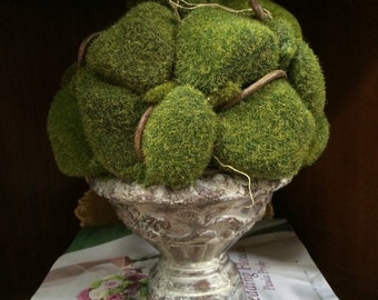 Topiary of Cushion Moss