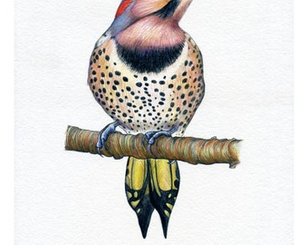 SALE PRINT! Woodpecker, Print of Original Watercolour Painting, Photoprint