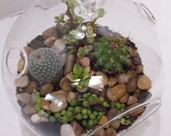 Succulent Plant Glass Globe Terrarium DIY Complete Kit with Four small Succulent Plants.