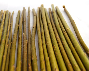 20 dried straight willow sticks for crafts or rabbit food, for ornaments, art. pet supplies, twigs and branch craft