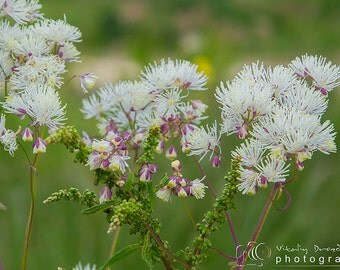 Nature photography, flower photos, Spring, art, home decor, Fine art photography, macro photography, Romance, gift for her, white flower