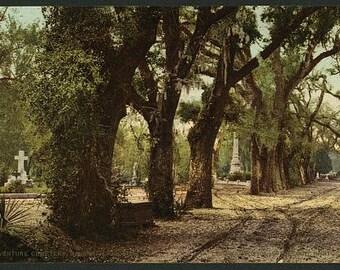 Bonaventure Cemetery, Savannah, Georgia 1901. Vintage photo panorama reprint 8x16-up. Bonaventure Cemetery (Savannah, Ga) Cemeteries Tombs