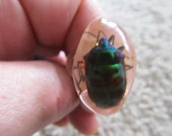 Vintage Ring Resin and Beetle Size 8