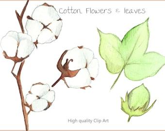 Cotton Flower Clip Art Set - Handpainted watercolor illustrations