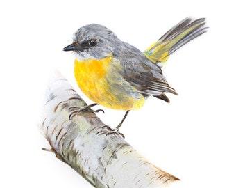 Bird Print - Bird Art - Robin Print