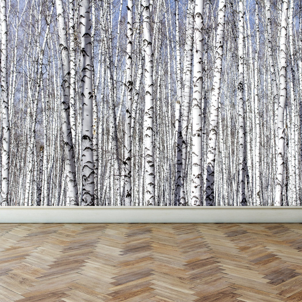 Wall mural white birch trees peel and stick repositionable for Birch tree wall mural
