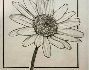 Original Daisy flower drawing 5.5x9 inches graphite and ink.