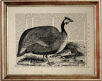 Guinea Fowl Vintage illustration, Print on Vintage Dictionary Page, Dictionary Page Book Art Print 8 x 10 inches