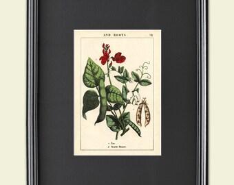 Botanical Print horticultural Victorian sketch A3 satin 285gsm Paper No.4