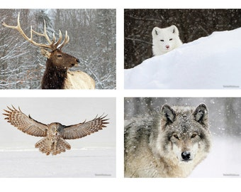 Wildlife in Snow Paper Print Collection Elk, Arctic Fox, Great Grey Owl, Timber Wolf - Fine Art Wildlife Photography