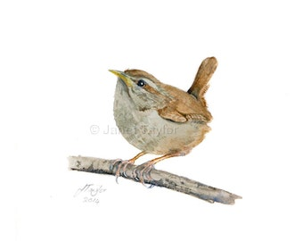 Wren painting: Print of an original watercolor by Jan Taylor.