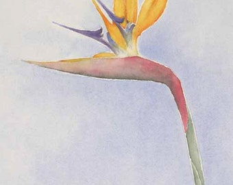 Bird of Paradise (Print)