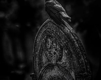 A Dark and Gothic black and white fine art photographic print of a Crow on a Gravestone. Wall Art  Lilith one of the graveyard crows.