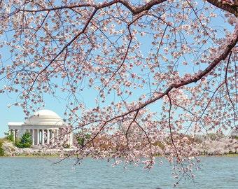 Washington DC Photograph - Tidal Basin - Cherry Blossoms - Fine Art Print - Wall Art Decor - Jefferson Memorial // Jefferson Blossoms