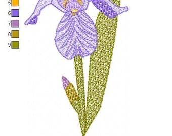 SFancy Woodland Iris 5 x 7