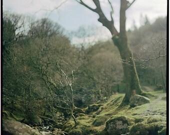 Irish Woods, Ireland, Glendalough, Photography, Art Print, Irish Nature, Analog, Landscape, Forest, Home, Cabin, Office Decor, Tree, Creek
