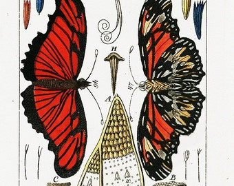 Digital Download Butterfly Yellow Red Black Instant Download You Print Digital Image 300 DPI