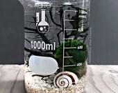 Scientific Moss Ball Terrarium in Large Glass Beaker / Marimo Moss Aquarium Specimen Jar