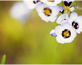 Spring White and Purple Blossoms Flower Fine Art Canvas wrap-