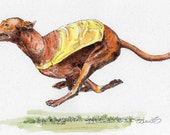 PHARAOH HOUND RACING Original Watercolor on Ink Print Matted 11x14 Ready to Frame