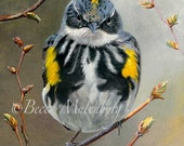 NEW! bird art PRINT yellow-rumped warbler wildlife fine art
