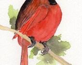 REDBIRD  ORIGINAL WATERCOLOR painting on heavy watercolor paper hand paintedby watercolor artist WinnieMar