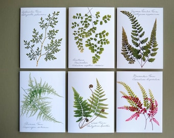 Set of 6 botanical pressed fern cards, green woodland forest ferns, nice gift set, house warming gift