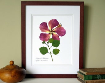 Press flower print, 11x14 double matted, Tropical Hibiscus, botanical art, wall decor no. 0100