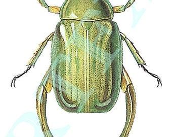 Green Beetle Blank Note Card Handmade